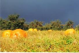 Pumpkin Patch Near Greenville Nc by Sky Top Orchard Pumpkin Patch North Carolina Haunted Houses