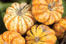 Natural Fertilizer For Pumpkins by Ay Mag Ay Is About You P Allen Smith Pile On The Gourds