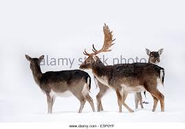 Sunniland Patio West Palm Beach by 5 Deer Antler Shedding Season Uk Fallow Deer Stags Dama