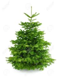 6ft Slim Christmas Tree by Beautiful Conifer Christmas Tree Part 5 Tree Conifer