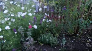 liatris spicata gardening forum gardenersworld