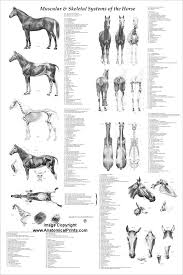 Horse Anatomy Coloring Book Images About Animal On