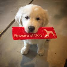Guard Dogs That Dont Shed by Dangerous Guard Dogs Album On Imgur
