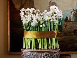 guide to paperwhites forcing bulbs planting and tips southern