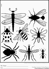 Insect Coloring Sheets With Bug Pages For Preschool