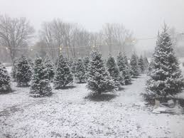 Broadview Christmas Tree Farm by 20 Tree Farms In Michigan That Have Perfect Christmas Trees For