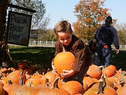 Southern Ohio Pumpkin Patches by Pigeon Roost Farm And Great Pumpkin Fun Center In Hebron Ohio