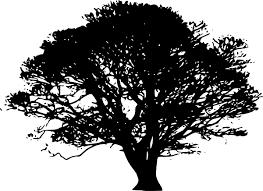 Black Oak Tree Clip Art at Clker vector clip art online