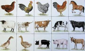 Farm Barnyard Animal Portraits Hand Painted Tiles, Tile Murals Childrens Bnyard Farm Animals Felt Mini Combo Of 4 Masks Free Animal Clipart Clipartxtras 25 Unique Animals Ideas On Pinterest Animal Backyard How To Start A Bnyard Animals Google Search Vector Collection Of Cute Cartoon Download From Android Apps Play Buy Quiz Books For Kids Interactive Learning Growth Chart The Land Nod Britains People