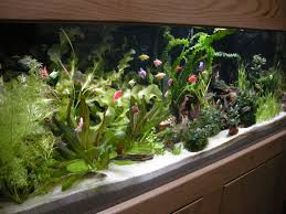 Petco Flower Ball Aquarium Decor by Show Off Your Fish Tank Page 135 255241