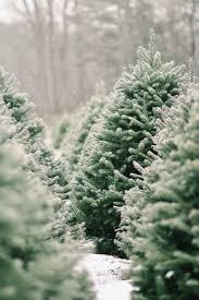 Christmas Tree Hill Shops York Pa by Best 25 Christmas Tree Farms Ideas On Pinterest Christmas Tree