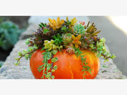 Pumpkin Patch Half Moon Bay Ca by Oct 22 Succulent Decorated Pumpkin For Children And Families