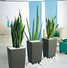 plantes vertes d interieur nouveau look pour plantes sans soucis conseils plantes vertes d