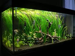 aquarium de 15 litres 28 images hidom aquarium fish tank 10 15
