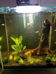 New To Hobby Friend Wanted To Make An Aquascape For As Cheap As ... Photo Planted Axolotl Aquascape Tank Caudataorg Suitable Plants Aqua Rebell Tutorial Natures Chaos By James Findley The Making Aquascaping Aquarium Ideas From Aquatics Live 2012 Part 4 Youtube October 2010 Of The Month Ikebana Aquascaping World Public Search Preserveio Need Some Advice On My Planned Aquascape Forum 100 Cave Aquariums And Photography Setup Seriesroot A Tree Animalia Kingdom Show My Our Lovely 28l Continuity Video Gallery Green 90p Iwagumi Rock Garden Page 8
