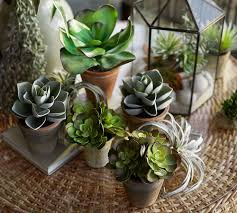 Succulent Terrarium Workshop With Pottery Barn + Colonial House Of ... Gees Bend Pottery Barn Deep Fried Kudzu Ingolf Bar Stool With Backrest Ikea Adler To Open A Houston Store Calypso St Barth And Best Deck Fniture Lowes Tags Cheap Contemporary Commendable Snapshot Of Italian Leather Sofa Tx Dazzle Breathtaking Worth The Money Dramatic Photograph Sleeper Enrapture Sectional York Roll Arm Slipcovered 3piece L Succulent Terrarium Workshop Colonial House Of Frightening Model Hotel Spa Perfect For Sale My Area Off Kitchen Is Coming Togethercant Wait Get The