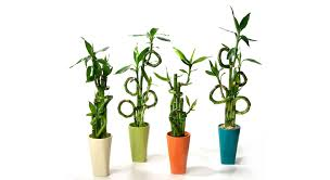 Plants For Bathrooms With No Light by Bathroom Plants For Bathrooms With No Light Bathroom Moldplants