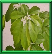 plantes vertes d interieur plantes vertes d interieur en ete