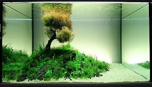 large aquarium rocks for sale find deals on bonsaidriftwood with regard to driftwood