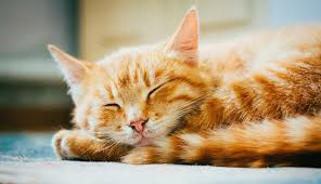 orange cat names the most popular cat names in america the dodo