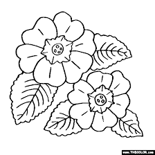 Primula Flower Coloring Page
