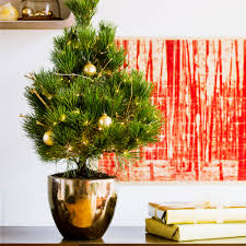 Top Live Christmas Trees by Photo Album Live Potted Christmas Trees All Can Download All