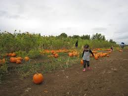 Pittsburgh Area Pumpkin Patches by 28 Best Pumpkin Patch Halloween Photos Images On Pinterest