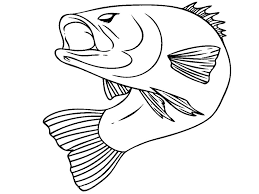 Bass Fish Realistic Coloring Picture For Kids