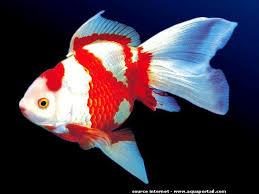 aquarium poisson prix prix d un aquarium pour poisson poisson naturel