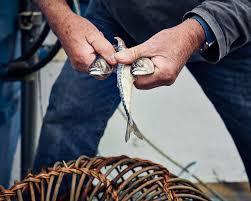 Decorative Lobster Trap Uk by Nigel Legge U2014 Gabriel Nivera