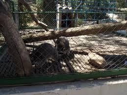 zoo fauverie du mont faron parc animalier toulon 83200 adresse