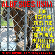 Animal Legal Defense Fund Sues USDA For Denying Tony The Tiger Is An ...