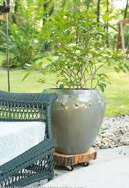 Patio Plant Stands Wheels by Tree Stump To Rolling Plant Stand Hometalk