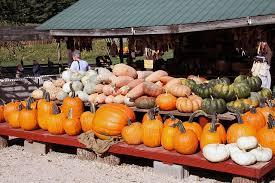 Best Pumpkin Farms In Maryland by Best Pumpkin Patches In Washington D C