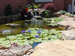 Recent Projects – Aquascapes Aquatic Patio Pond Kit Aquascapes Aquascapepro Waterfall Rock Cleaner Aquablox Modular Water Storage System 23 Best Gardens Ponds Images On Pinterest Gardens Ohio Installationmaintenance Contractobuildinstallers The Best 28 Of Meyer Aquascapes Pond Water Urchill Chair Living Spaces Recent Projects Aquascape Aquabasin Medium Creations Deco Planter Project Image Gallery 60 Before And After