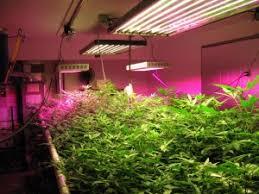 Platinum led grow lights reviews  LED Grow Lights Expert