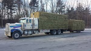 Hay For Sale In Boon, Michigan Boonville - Hay Map Hay For Sale In Boon Michigan Boonville Map Outstanding Dreams Alpaca Farm Phil Liske Straw Richs Cnection Peterbilt 379 At Truckin Kids 2013 Youtube Bruckners Bruckner Truck Sales Lorry Stock Photos Images Alamy Mitsubishi Raider Wikipedia For Lubbock Tx Freightliner Western Star Barmedman Motors Cars Sale In Riverina New South Wales On Economy Mfg Dennis Farms Equipment Auction The Wendt Group Inc Land And