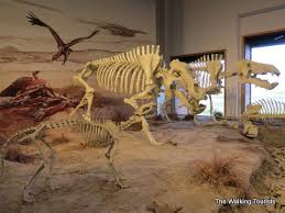 Agate Fossil Beds by Agate Fossil Beds Site Of Horses With Claws Giant Pig Bison The