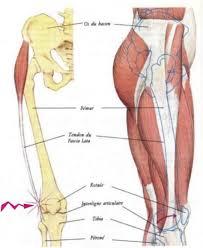 le de l essuie glace mal au genou