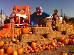 Nearest Pumpkin Patch Shop by Pumpkin Patches Sprout Up Across The East Bay Concord Ca Patch