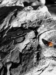 Cheater Cheater Pumpkin Eater Nursery Rhyme by Jurassic Park Brick House