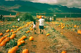 Waimanalo Pumpkin Patch Oahu by Country Farms