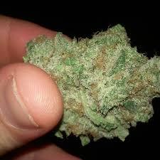 Northern Lights 5 Cannabis Strain Report
