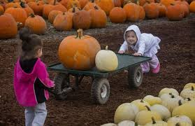 Kent Island Pumpkin Patch by Pumpkin Patches U0026 Festivals Where To Take The Family For Fall Fun
