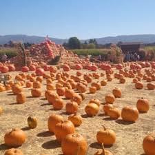 Pumpkin Patch Sf Yelp by Solvang Farmer U0027s Pumpkin Patch 26 Photos U0026 11 Reviews Local