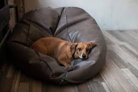 hund an neuen schlafplatz gewöhnen so klappt es petlindo