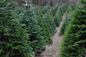 Christmas Tree Farm Eustis Fl by Christmas Tree Fram Christmas Lights Decoration