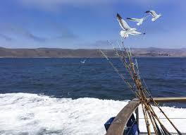Morro Bay Cabinet Company by No Dory But Plenty Of Fish Fun Found On Morro Bay Charter
