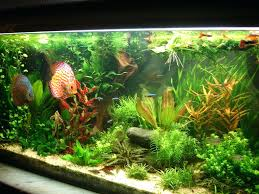 Aquascaping Forum – Homedesignpicture.win An Inrmediate Guide To Aquascaping Aquaec Tropical Fish Most Beautiful Aquascapes Undwater Landscapes Youtube 30 Most Amazing Aquascapes And Planted Fish Tank Ever 1 The Beautiful Luxury Aquaria Creating With Earth Water Photo Planted Axolotl Aquascape Tank Caudataorg 20 Of Places On Planet This Is Why You Can Forum Favourites By Very Nice Triangular Appartment Nano Cube Aquascape Nature Aquarium Aquascaping Enrico A Collection Of Kristelvdakker Pearltrees