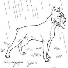Husky Coloring Pages Fresh Best A Book For Pictures